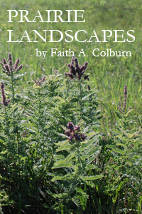 Prairie Landscapes: One Mind Prowling